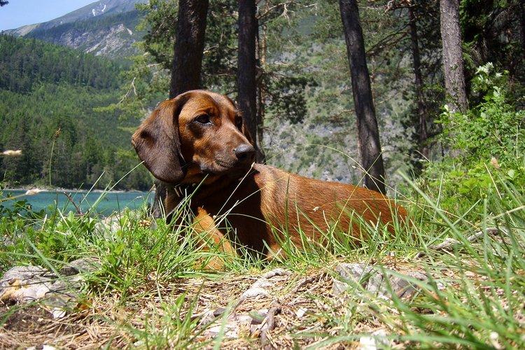 Koiratutka auttaa isäntää säilyttämään yhteyden koiraansa vaativissakin metsästystilanteissa.