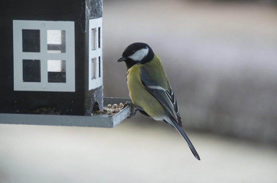 Linnunruoka pitää linnut voimissaan kylmänäkin talvena.