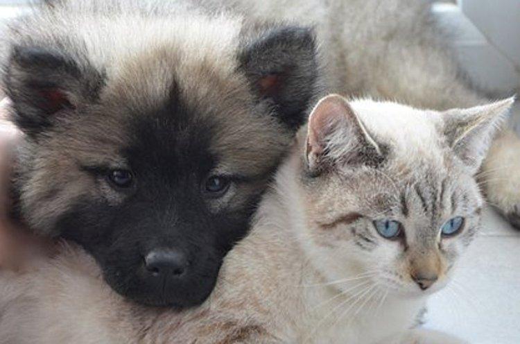 Lemmikistä saa uskollisen ystävän.