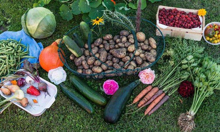 Laadukkaat puutarhan tarvikkeet mahdollistavat hyvän sadon.