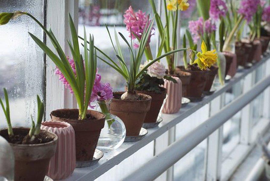 Puutarharuukut elävöittävät sisustusta ja puutarhaa.