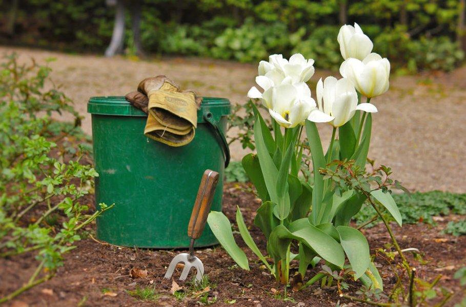 Puutarhan hoito vähentää tutkitusti stressiä. Kylvä puutarhan kukat ja kasvit siemenestä, niin pääset seuraamaan kasvun ihmettä.