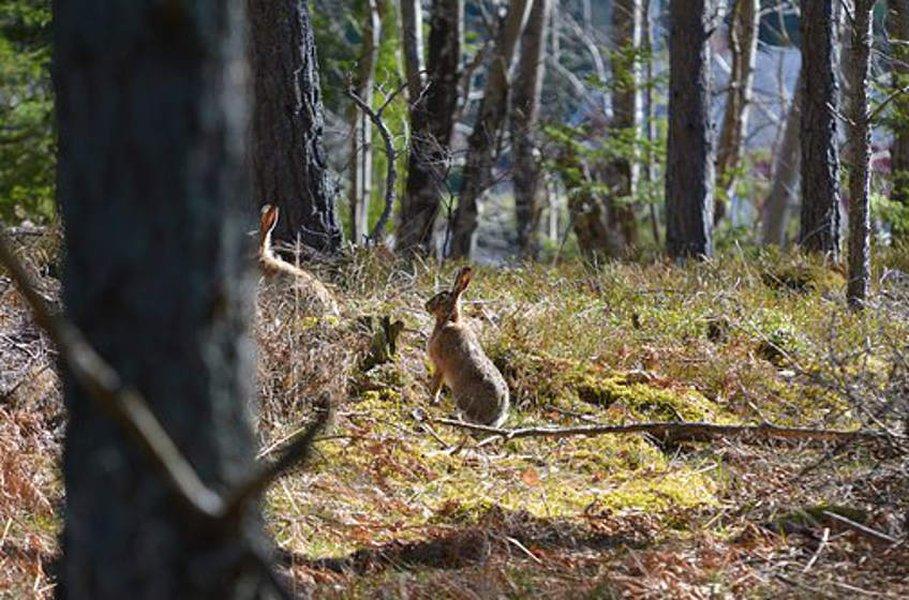 Ansaraudat ja pyydykset vaativat metsästäjältä huolellisuutta.