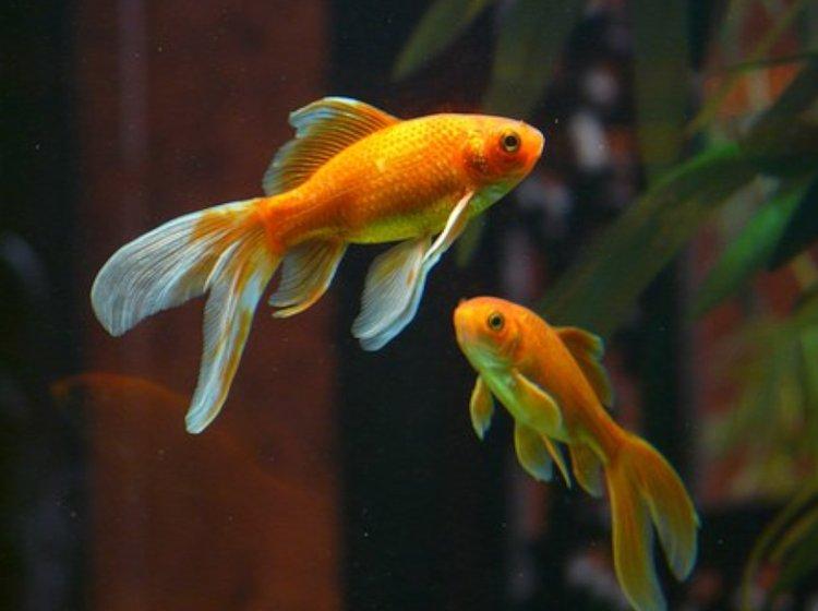 Akvaariotuotteet on vaivaton tilata netistä.