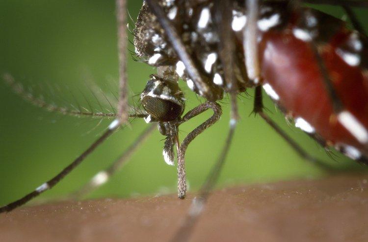 Hyönteiskarkotteet pitävät kesän ärsyttävimmät vieraat poissa iholta ja sisätiloista.