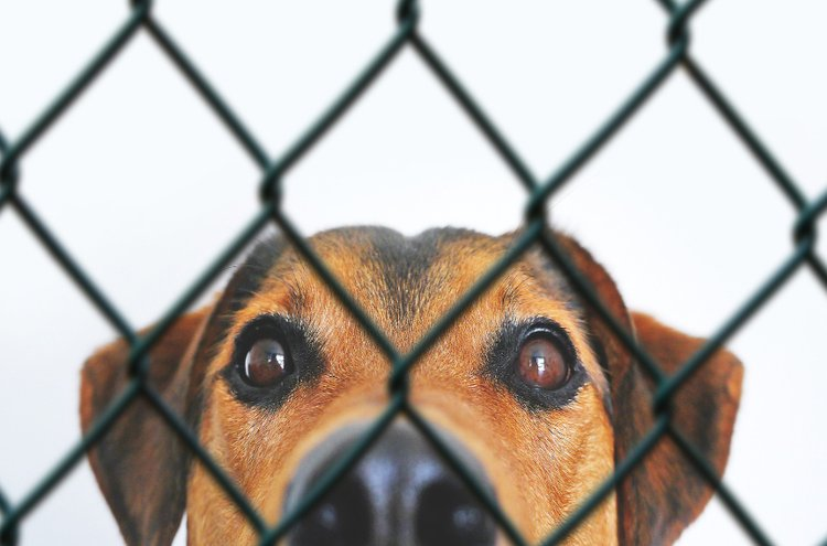 Koiraverkon tulisi kestää myös eläimen mahdolliset syöksyt ja hyökkäykset aitaa kohti. Mikäli kyseessä ei ole vallan vauhdikas hauva, koira-aidaksi sopivat verkkoaidan lisäksi myös viehättävät, puiset aidat.