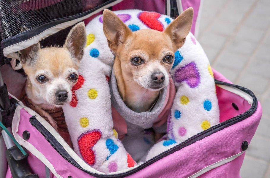 Koiran kuljetuslaukku soveltuu hyvin pienemmille koirille ja matkustaminen onnistuu eri liikennevälineissä.
