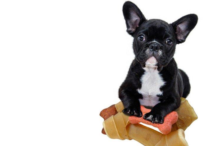 Laadukas ja ravitseva koiranruoka antaa eväät lemmikin kasvuun ja hyvinvointiin.