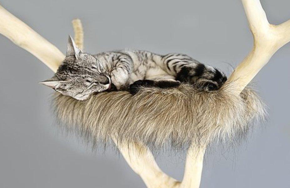 Elämästä nautiskeleva kissa viihtyy raapimapuun nukkumatasoilla.