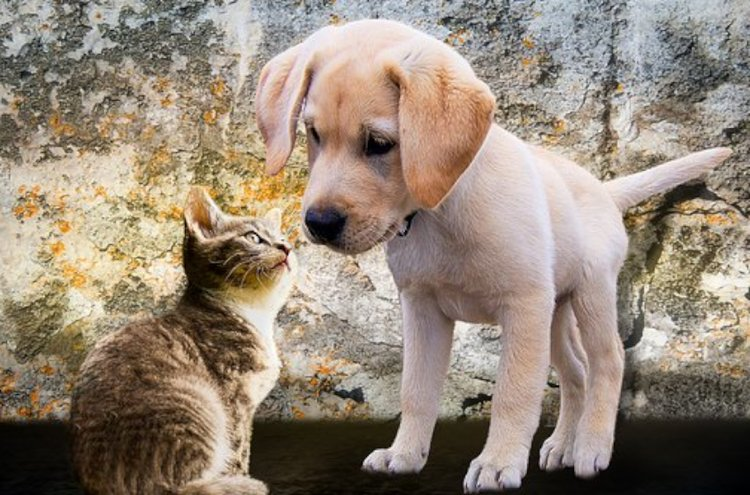 Hyvä hoito on lemmikki- ja kotieläinten oikeus.