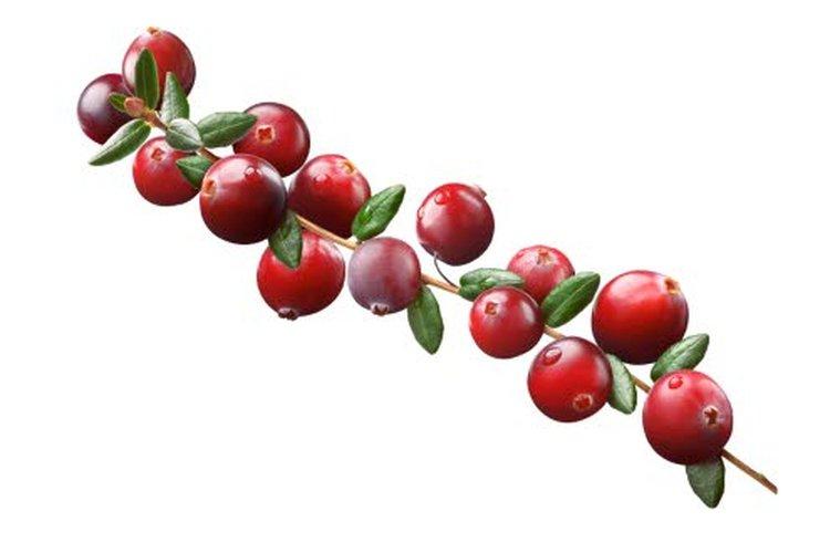 Runsaasti C-vitamiinia sisältävä antioksidanttirikas karpalo tunnetaan paremmin virtsatietulehdusten hoitajana, mutta siitä on hyötyä myös hiivan hillinnässä, onhan se vanhastaankin tunnettu apu suusammaksen taltuttamiseen. Karpaloa syömällä saa myös luontaista salisylaattia, jolla tiedetään olevan kuumetta, tulehdusta ja kipua lievittävää vaikutusta. Myös puolukkaa käytetään virtsatietulehdusten ennaltaehkäisyssä.